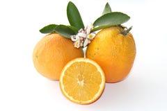 Oranges isolated on white Royalty Free Stock Photo