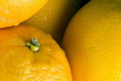 Oranges for juice bio. For restaurant stock photos