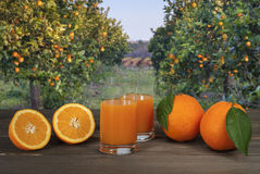 Oranges juice. Orange juice and oranges field Stock Photo