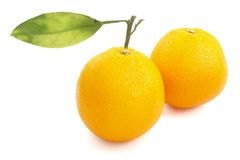 Oranges with leaf 1. Still life of oranges and leaf on white background with clipping path Stock Photos