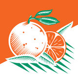 Oranges. And leafs vector draw royalty free stock photography