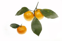 Oranges with leaves Stock Images
