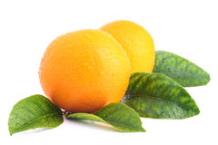 Oranges with leaves Royalty Free Stock Image
