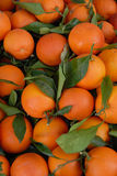 Oranges and leaves. A basket of oranges with green leaves Stock Image