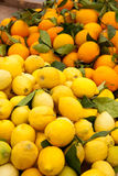 Oranges and lemons Royalty Free Stock Photos