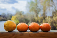 Oranges and lemons on the balcony Royalty Free Stock Photos
