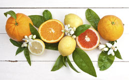 Oranges and lemons with blossoms. Citrus fruits with blossoms and leaves on a rustic wooden table royalty free stock image