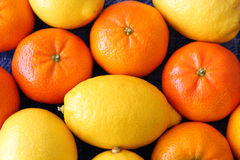 Oranges and Lemons. A Group of Oranges and Lemons stock image