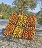 Oranges and lemons for sale Stock Image