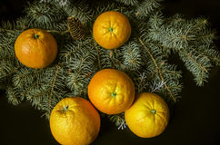 Oranges lumineuses, se trouvant sur le sapinargenté de branchImages stock