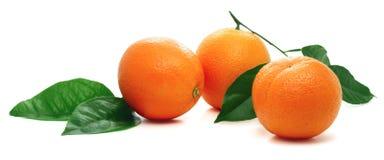 Oranges mûres avec la lame verte. Photographie stock libre de droits