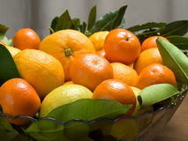 Oranges and mandarines in the bowl Stock Photography