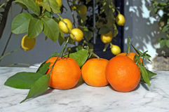 Oranges on a marble table and some lemon. Trees in the background stock photography