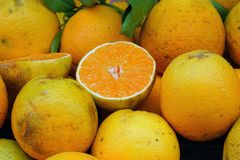 oranges at the market stock photo