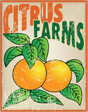 Oranges on the old card stock illustration