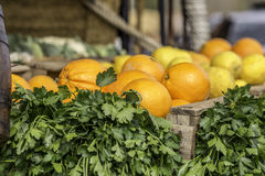 Oranges and parsley Stock Photography