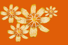 Oranges. Royalty Free Stock Photography