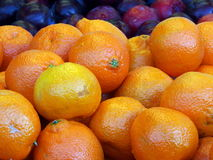 Oranges and plums fruit display. Bright zesty oranges in the foreground with plums in the background, photo taken at a fruit market Stock Image
