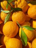 Oranges rouges siciliennes Images libres de droits