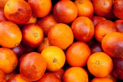 Oranges sanguines Image stock