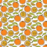 Oranges seamless background. Royalty Free Stock Image
