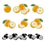 Oranges set. Vector. Illustration fruit royalty free illustration