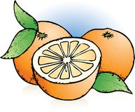 Oranges Sketch Royalty Free Stock Photos