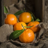 Oranges on stalk in rustic kitchen setting with old wooden box a Royalty Free Stock Photo