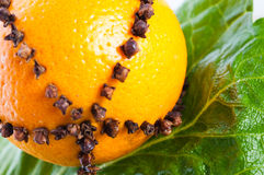 Oranges studded with cloves Royalty Free Stock Images