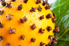 Oranges studded with cloves Stock Photos