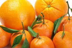 Oranges and tangerines Stock Image