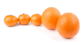 Oranges and tangerines in row. Isolated on white background royalty free stock photography