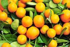 Oranges on tree Royalty Free Stock Photography