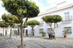 Oranges trees in plaza of Estepona Stock Photography