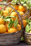 Oranges in a trug in sunshine outdoors. Tropic fruits royalty free stock images