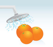 Oranges under a shower Stock Image