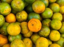 Oranges vertes Image libre de droits