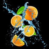 Oranges with water splash on the black background Stock Photos