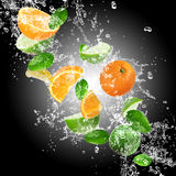 Oranges with water splash Royalty Free Stock Photo
