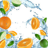 Oranges with water splash Stock Image