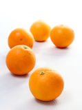 Oranges on white background Royalty Free Stock Image