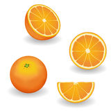 Oranges, whole, half, slice, wedge. Fresh, natural oranges, four views: whole, half, slice, wedge. Graphic illustrations  on white background. EPS8 includes Stock Images