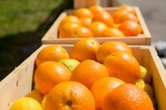 Oranges in wooden crates stock photo