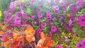 Orangey and Purpley. Beautiful flower arrangement Stock Photo