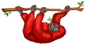 Orangoetan stock illustratie