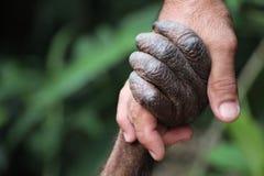 Orangoetan en Mens stock foto