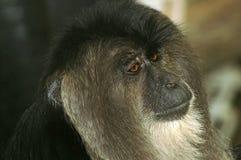 Orangotango no jardim zoológico de Moscou fotografia de stock royalty free