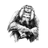 orangutan ελεύθερη απεικόνιση δικαιώματος