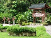 Free Orangutan Animal Sanctuary In Sepilok, Malaysia Stock Images - 122734704