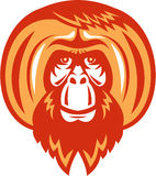 Orangutan Bearded Front Retro Royalty Free Stock Photo